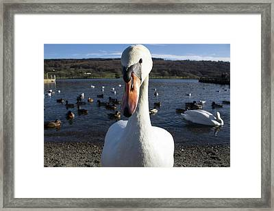 A Bit Close Framed Print