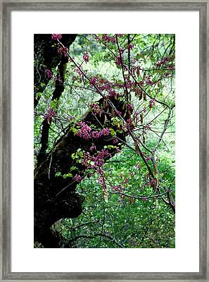 A Bit Of Color Framed Print by Brigid Nelson