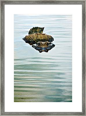 A Bit Of Curiosity Framed Print by Christopher Holmes