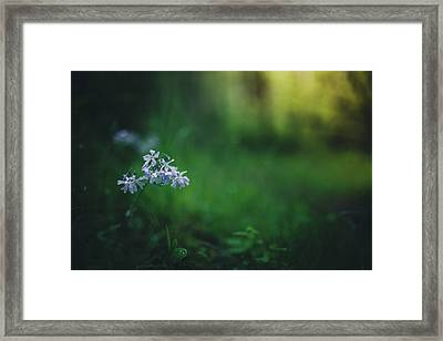 Framed Print featuring the photograph A Bit Of Forest Magic by Shane Holsclaw