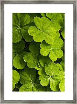 A Bit Of Green Framed Print