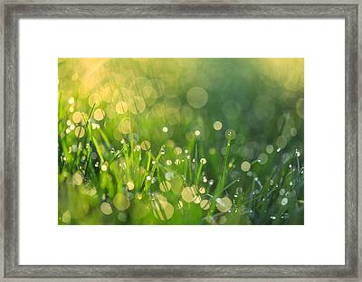 A Bit Of Green Framed Print by Rachel Cohen