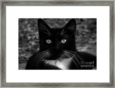A Black Cat's Life -florida Framed Print