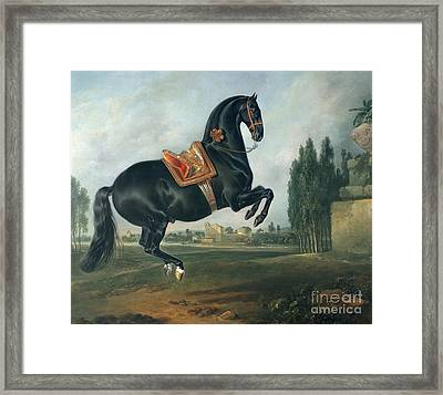 A Black Horse Performing The Courbette Framed Print by Johann Georg Hamilton