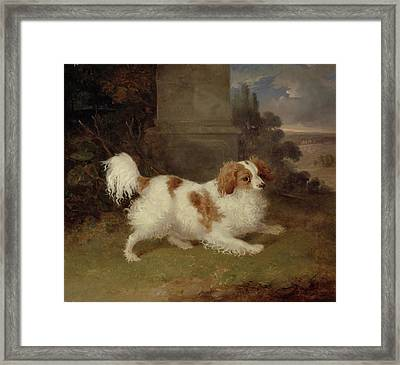 A Blenheim Spaniel Framed Print by William Webb