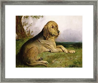 A Bloodhound In A Landscape Framed Print by English school