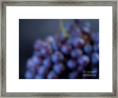 A Blue Bunch Of Grapes Framed Print by Patricia Bainter