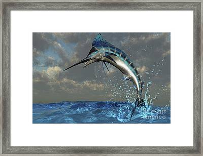 A Blue Marlin Flashes Its Iridescent Framed Print
