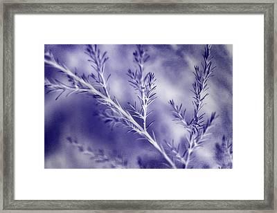 A Blue Mood Framed Print by Mike Eingle