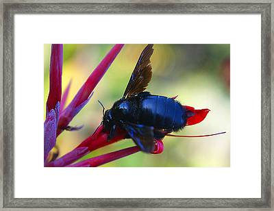 Framed Print featuring the photograph A Bluebee by DiDi Higginbotham