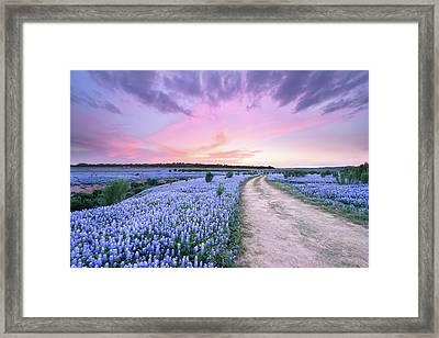 A Bluebonnet Field Under Evening Sky - Texas Framed Print