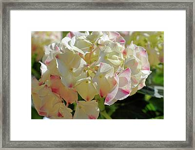 Framed Print featuring the photograph A Blush Of Pink by Cricket Hackmann