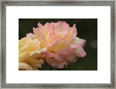A Blush Of Pink Framed Print