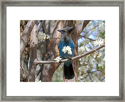 Framed Print featuring the photograph A Bouquet For You by Donna Kennedy