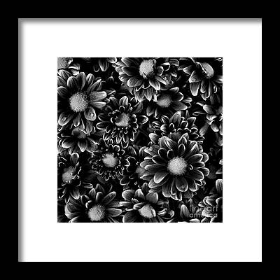 Flowers And Water Drops Framed Prints
