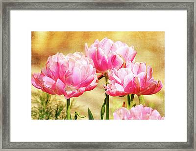 A Bouquet Of Tulips Framed Print