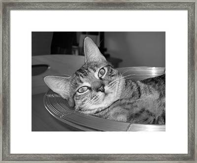 A Bowl Of Ginger Framed Print by Maria Bonnier-Perez