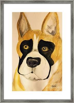 A Boxer Portrait Framed Print