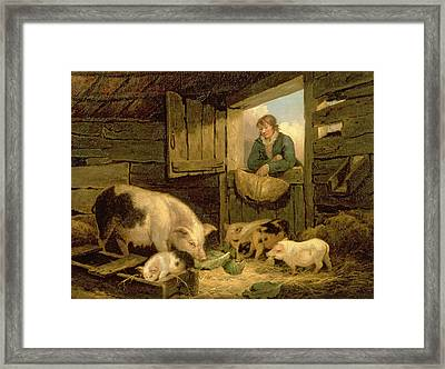 A Boy Looking Into A Pig Sty Framed Print
