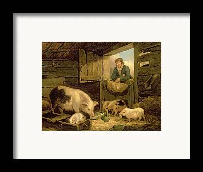 Male Hog Framed Prints