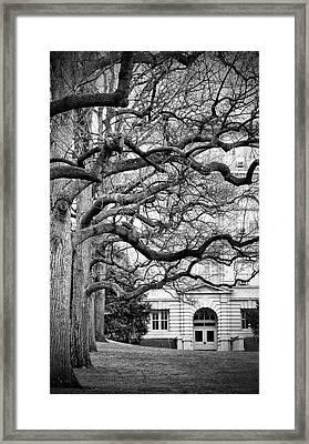 A Branch Salute Framed Print