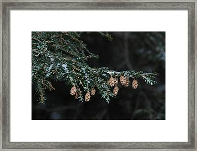 A Branch's Treasure Framed Print by See Me Beautiful Photography