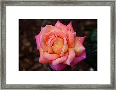 Framed Print featuring the photograph A Breath From Sarasota by Michiale Schneider