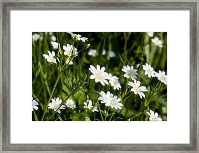 Framed Print featuring the photograph A Breeze by Stewart Scott