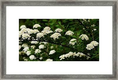A Bridge To The Valley Of Lilies Framed Print