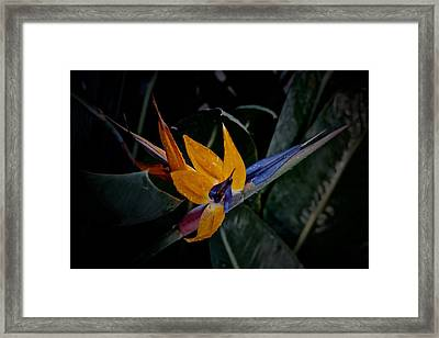 A Bright Blooming Bird Framed Print