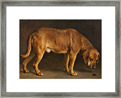 A Broholmer Dog Looking At A Stag Beetle Framed Print