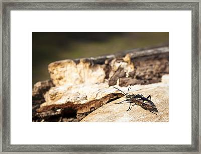 Framed Print featuring the photograph A Bugs Life by Stewart Scott