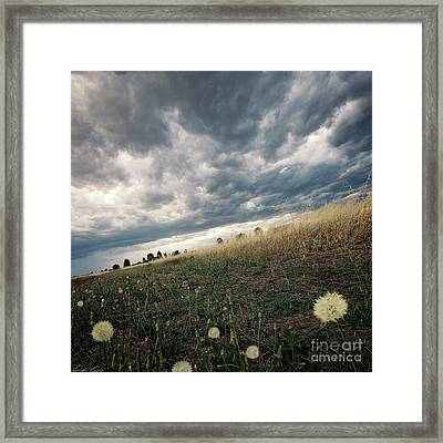 A Bug's View Framed Print