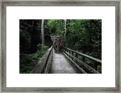 A Bull On The Boardwalk Framed Print