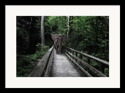 Tree Creature Photographs Framed Prints