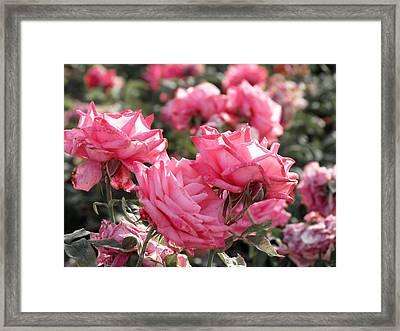 Framed Print featuring the photograph A Bunch Of Pink by Laurel Powell