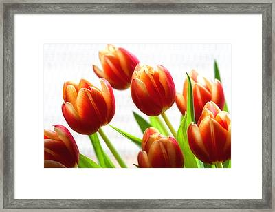 A Bunch Of Tulips Framed Print