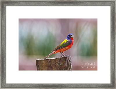A Burst Of Color Framed Print
