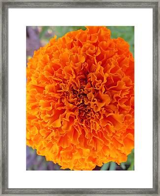 A Burst Of Orange Framed Print