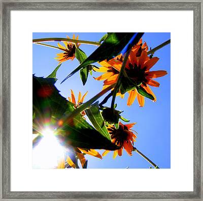 A Burst Of Sunshine Framed Print by Sherwanda Irvin