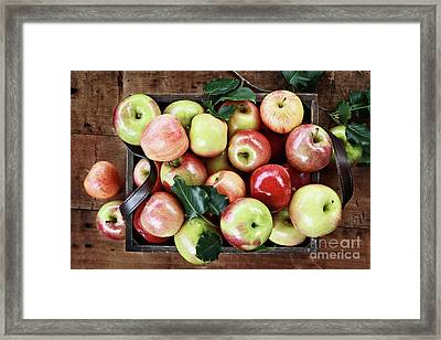 A Bushel Of Apples  Framed Print by Stephanie Frey