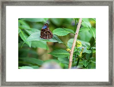 Framed Print featuring the photograph A Butterfly Waiting by Raphael Lopez