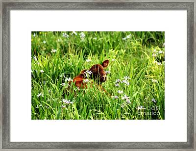A Calf's Perfect Haven  Framed Print