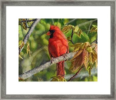 A Cardinal Named Carl Framed Print