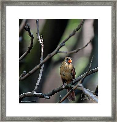 Framed Print featuring the photograph  A View From The Tree Tops  by Patricia Youngquist