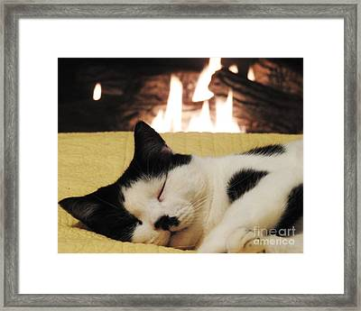 A Catnapping Cat Framed Print