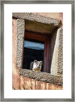 A Cat On Hot Bricks Framed Print