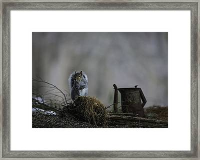 A Cautious Pause Framed Print by Everet Regal