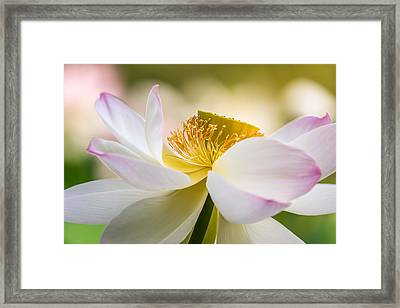 A Celebration Framed Print