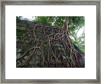 A Chance Of Survival Framed Print by Ming Yeung
